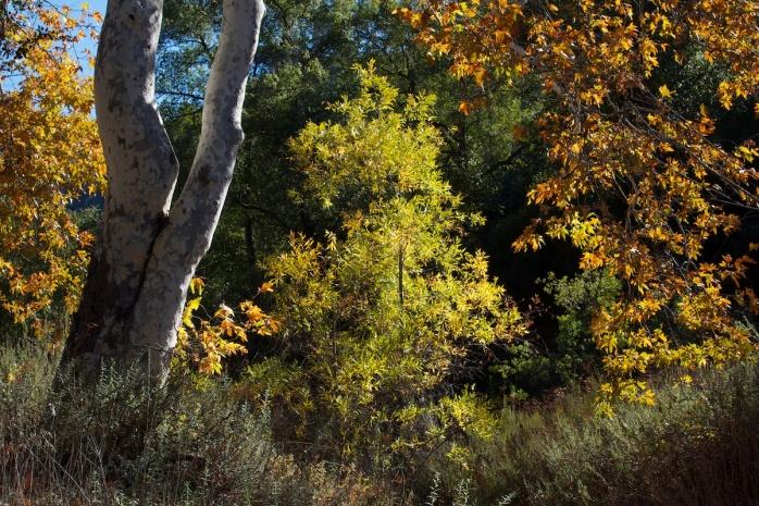 Hauser Creek