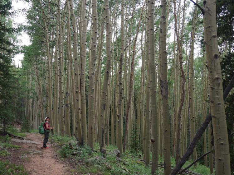 Deb in an Aspen grove in the Lost Creek Wilderness