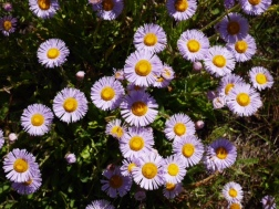 Trail side wildflowers.